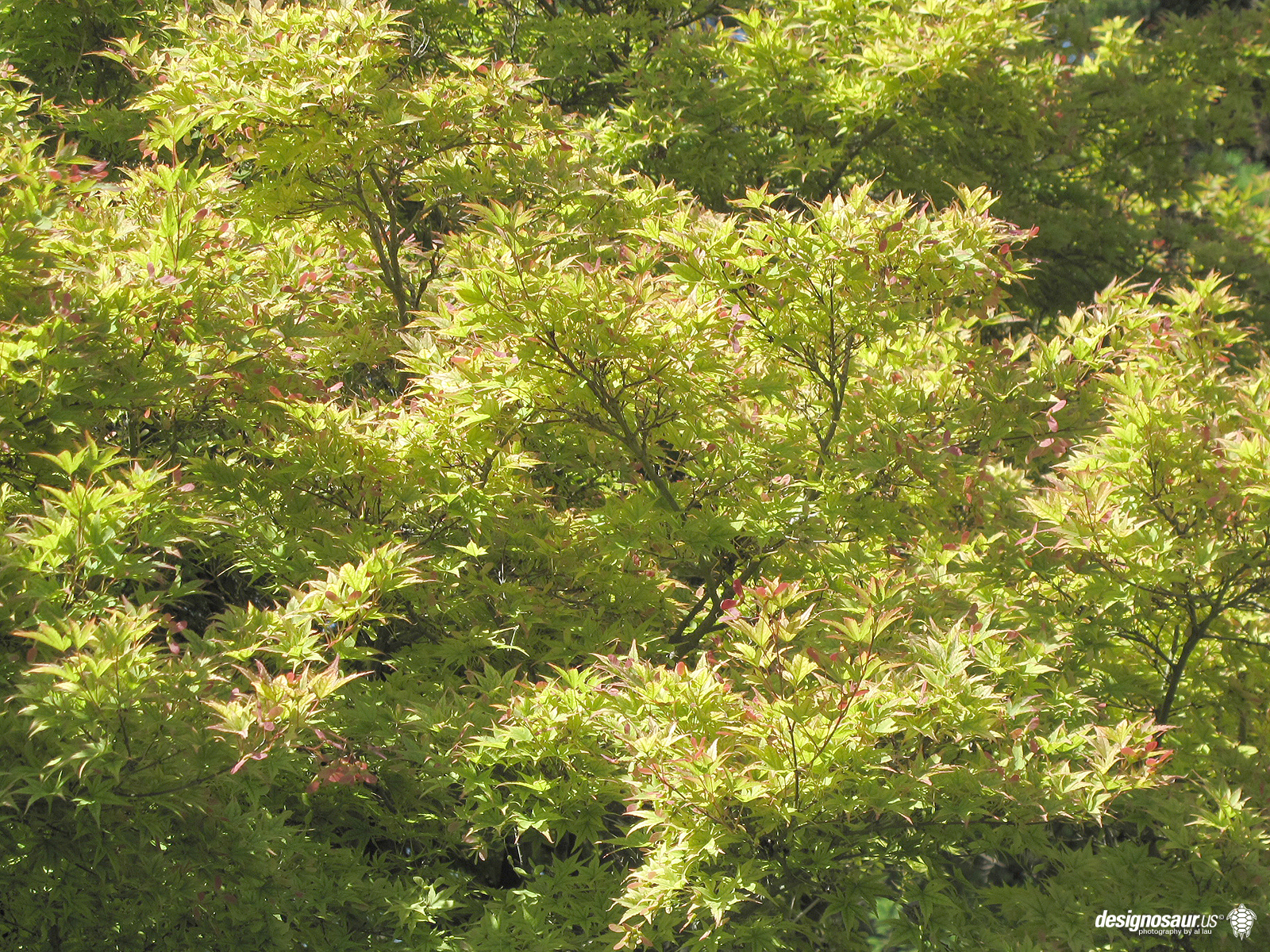 photo japanese tea garden blogdesignosaurus