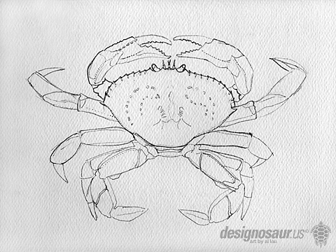 drawing_dungeness_crab_sm