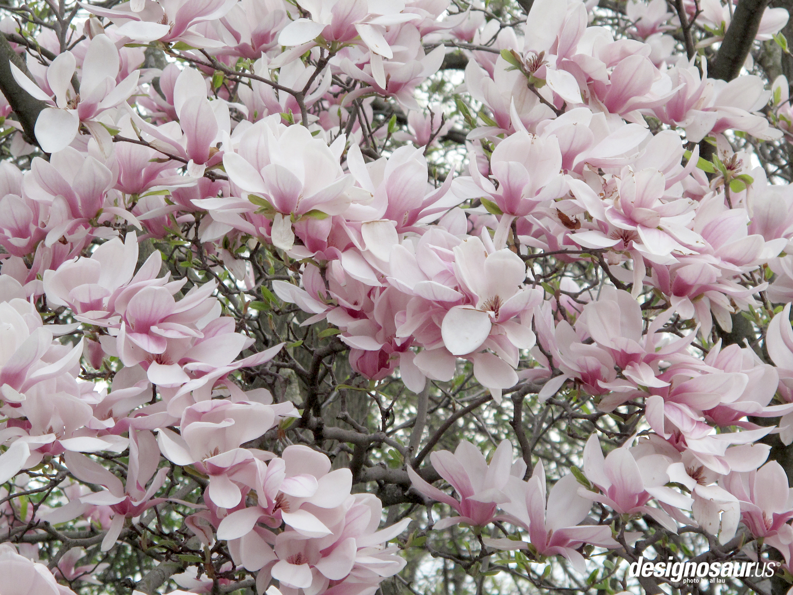 Best Wallpaper Home Screen Spring - spring_wallpaper_01  Perfect Image Reference_603489.jpg