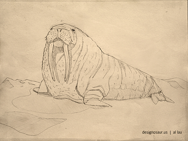 sketch: walrus | blog.designosaur.us