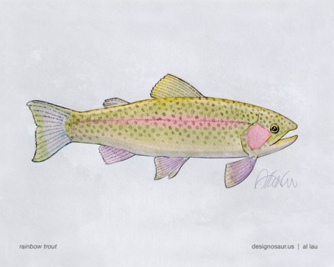 rainbow_trout_by_al_lau