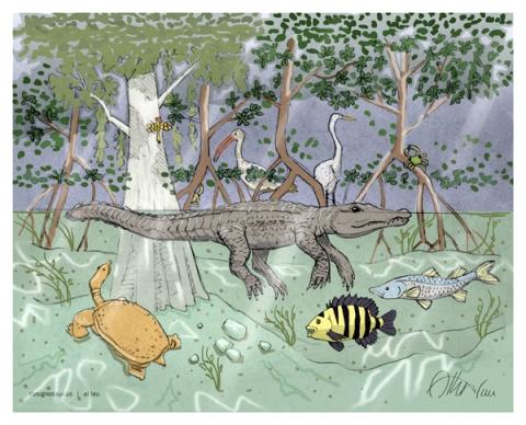 everglades wildlife painting