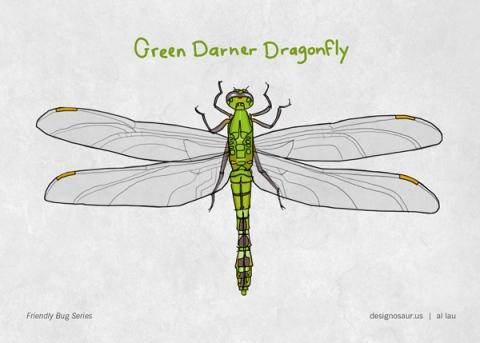 dragonfly green darner