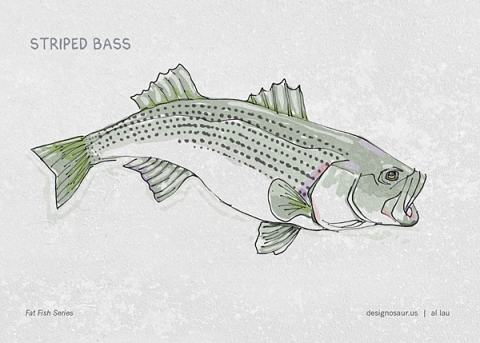 striped_bass_by_al_lau