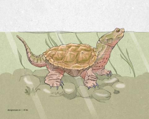 snapping_turtle_by_al_lau