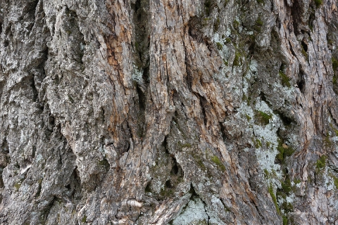tree_bark_by_al_lau