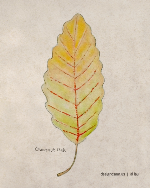 chestnut_oak_by_al_lau