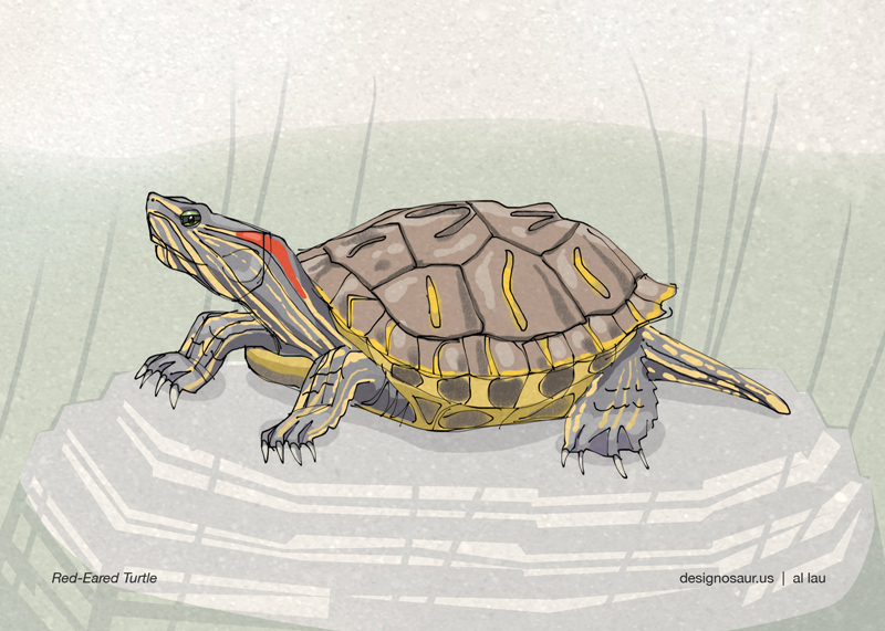 illustration: red-eared slider blog.designosaur.us