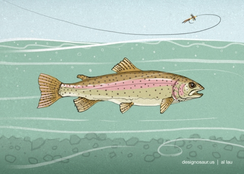 rainbow_trout_and_fly_by_al_lau
