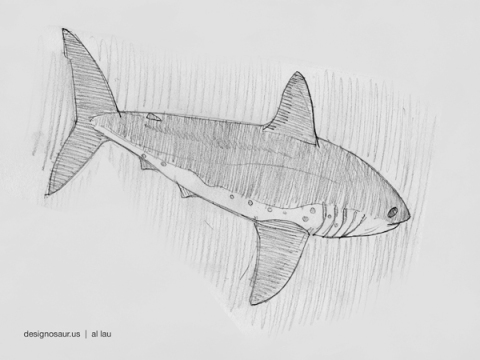 salmon shark_by_al_lau