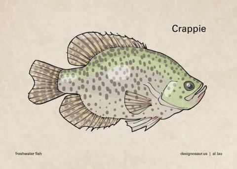 crappie_by_al_lau