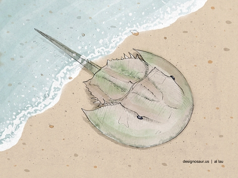 horseshoe_crab_v2_by_al_lau