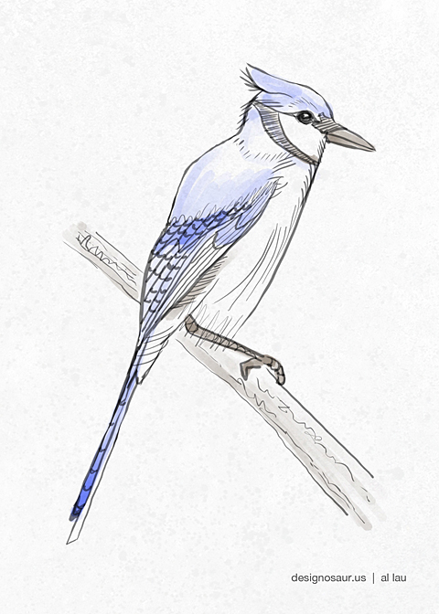 blue_jay_by_al_lau