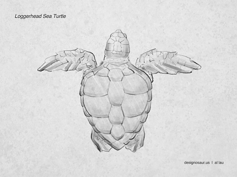 sea_turtle_loggerhead_by_al_lau