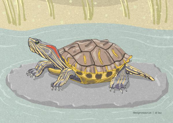 red_eared_turtle_by_al_lau