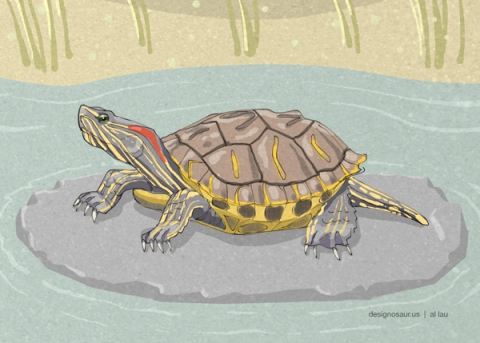 red_eared_turtle_by_al_lau