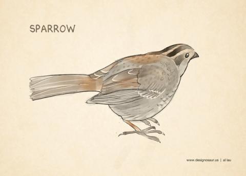 sparrow_by_al_lau