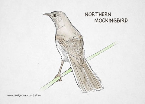 northern_mockingbird_by_al_lau