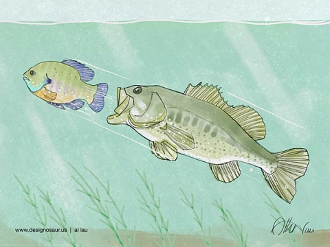 bass_chase_bluegill_by_al_lau