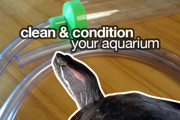clean and condition aquarium
