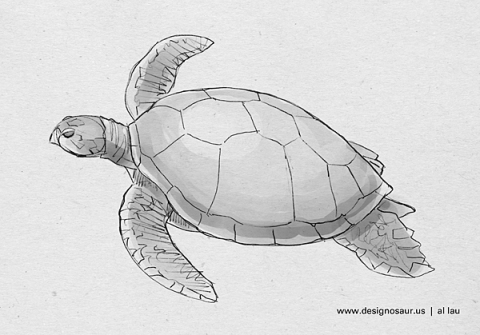 green_sea_turtle_by_al_lau