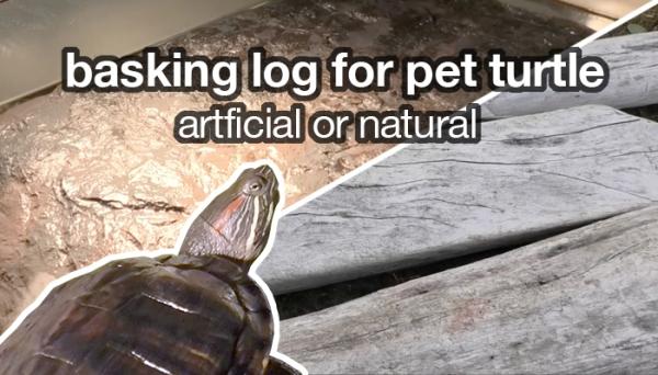 basking log for pet turtles