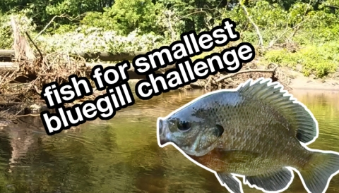 catch smallest bluegill challenge