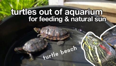 take_turtles_out_of_tank
