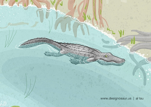 alligator_in_mangroves_by_al_lau