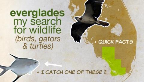 everglades_explore wildlife
