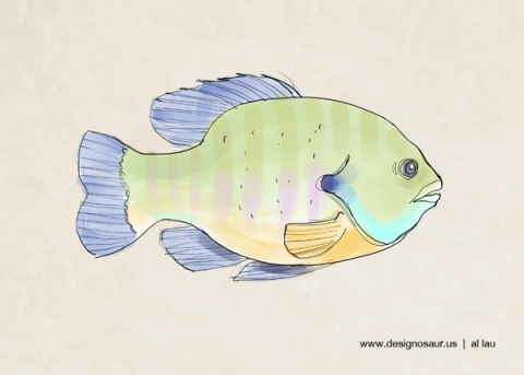 bluegill_by_al_lau_v2