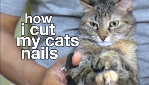 how i cut my cats nails