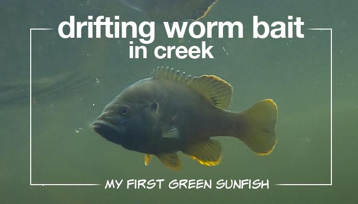 drifting worm in creek