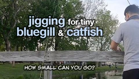 jigging for bluegill and catfish